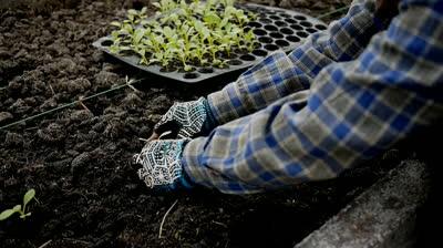 stock-footage-farmer-planting-vegetable